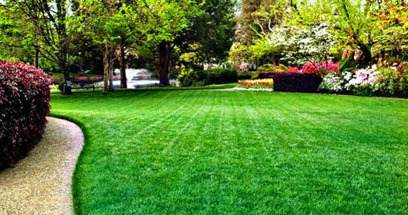 4 Ways You Might be Killing Your Lawn [and Hurting Your Home Value]